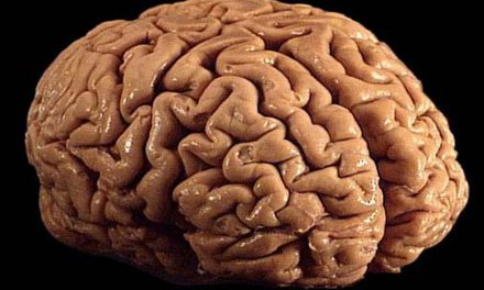 """Le cannabis ne """"brule"""" pas le cerveau"""