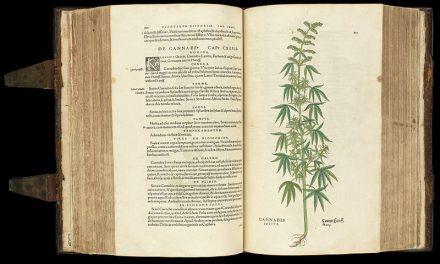 Halte à la désinformation sur le cannabis!