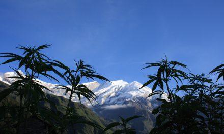 Cannabis: vers une dépénalisation douce?
