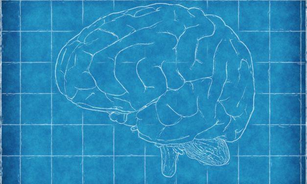 Pas d'effet du cannabis sur la structure cérébrale: encore une étude